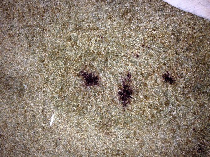 Cách xử lý thảm trải sàn khi bị biến dạng hoặc bị cháy