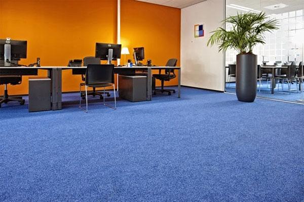 Tại sao nên sử dụng thảm trải sàn màu xanh cho văn phòng công ty